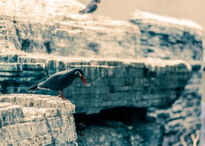 Artis Zoo - Bird on cliff