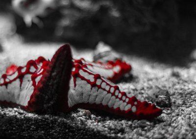 Artis Zoo - Starfish