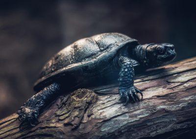 Artis Zoo - Tortoise