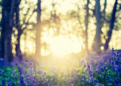 Bluebell-Flare