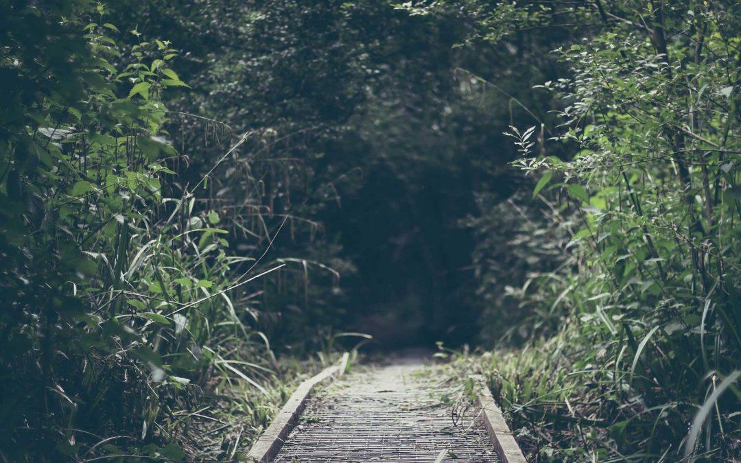 Aversley Woods -Cambridgeshire