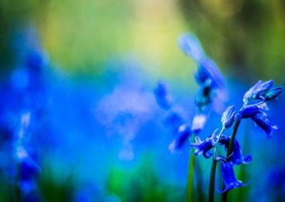Sorrow-in-Spring