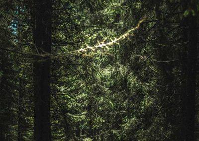 Enter-The-Black-Forest