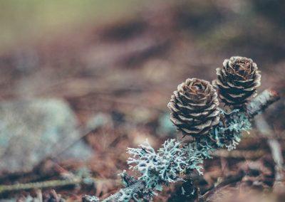Two-Pinecones