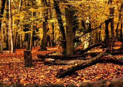 Hinchingbrooke Park autumn forest landscape